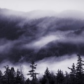 Fog and low clouds in Alaskan mountains with spruce trees.