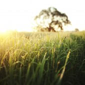 sun rising above a field of grass during the summer