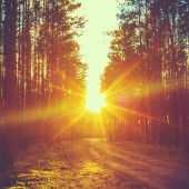 Forest Road Under Sunset Sunbeams.