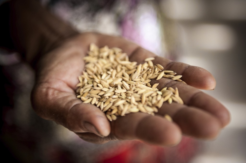 Rice in the hand of a woman