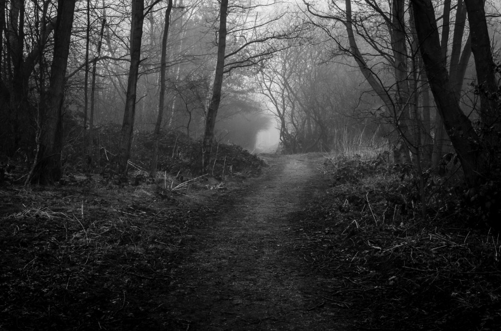 A long path through a dark wood on a foggy morning