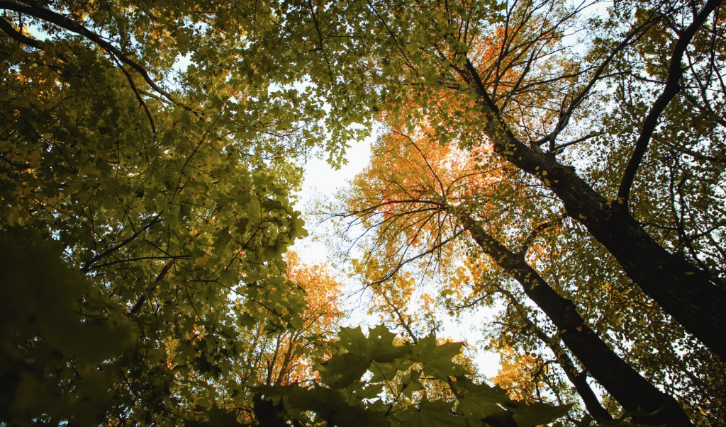 Autumn leaves forest background with trees