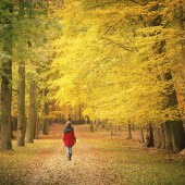 Walking in the autumn park