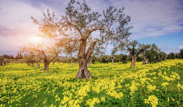 Beautiful yellow flowers in the garden of old trees