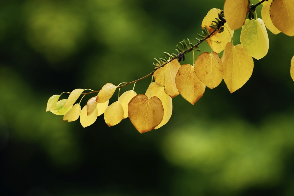 First Autumn Leaves