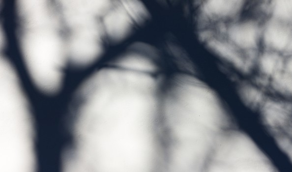 Tree shadow on the White Wall Background