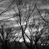 barren tree clouds