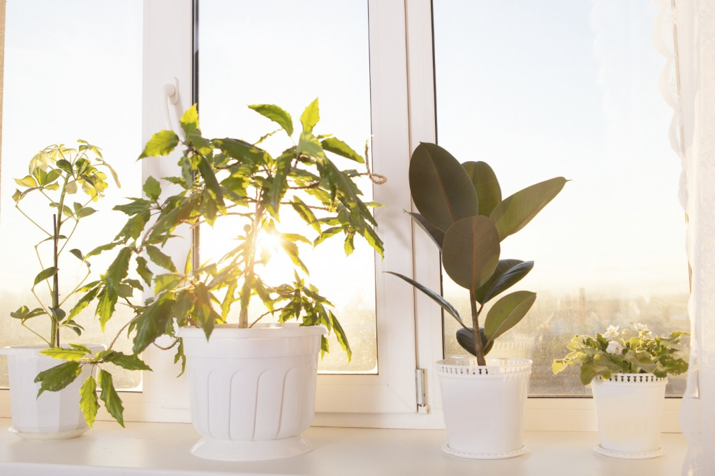 Green plant in a modern home