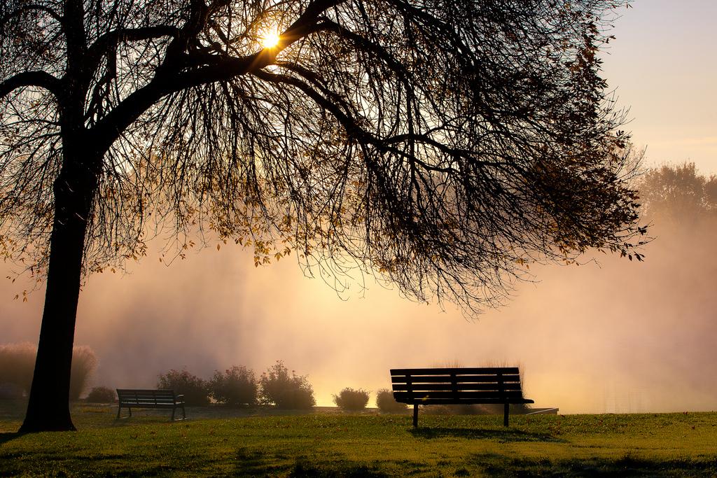 tree, bench