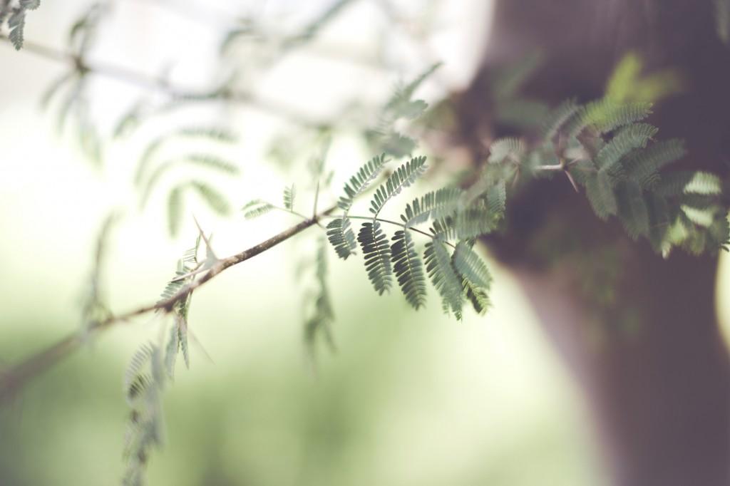 Macro of Leaves in a Bushy Tree