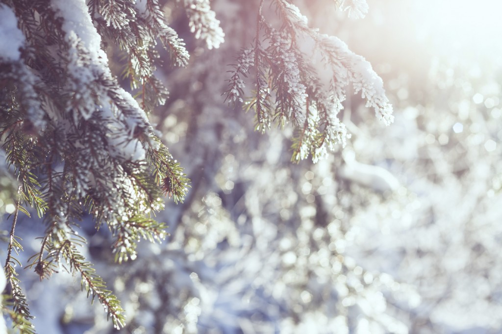 Snowy winter background with bright sunshine