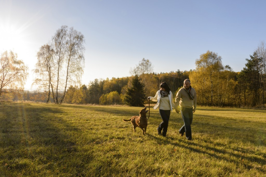 Couple walk dog in countryside autumn sunset