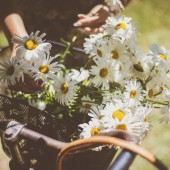 Women bicycle and flowers