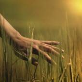 womans hand touching the tall grass in a field.