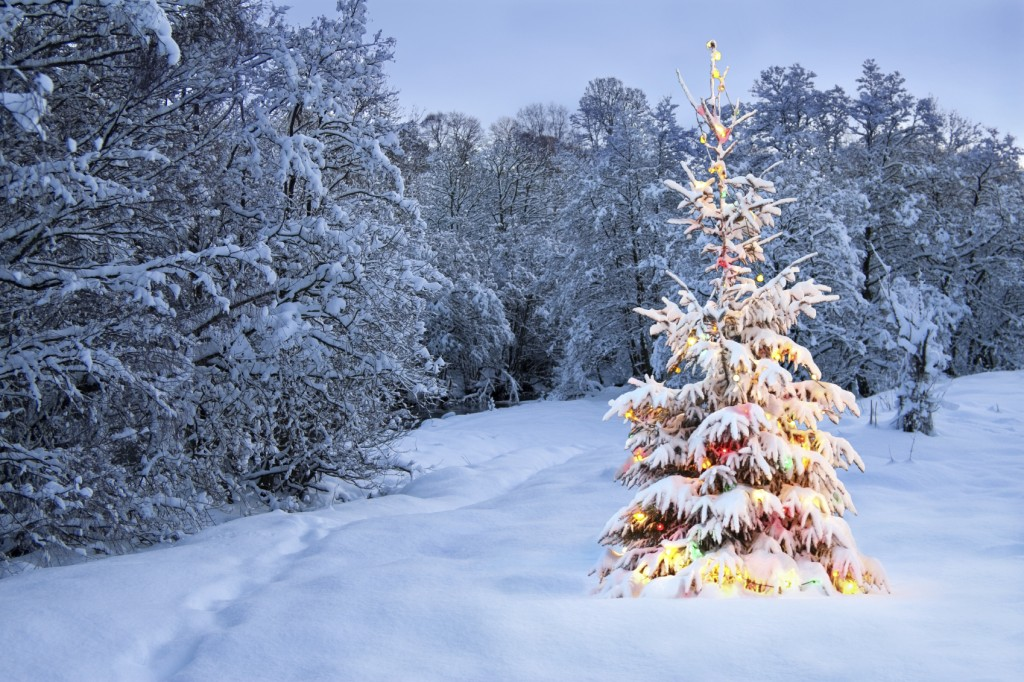 Christmas tree in snow with colored lights