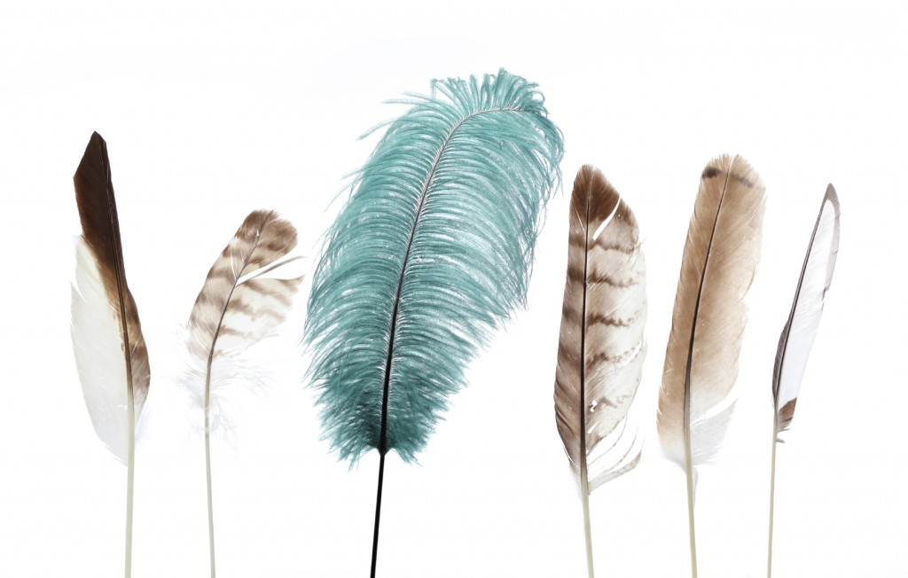 group of brown and white feathers with one large green feather