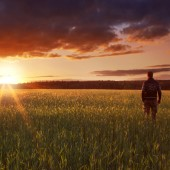 Man walking through a glowing field of crops at sunset