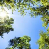 Treetops framing the sunny blue sky