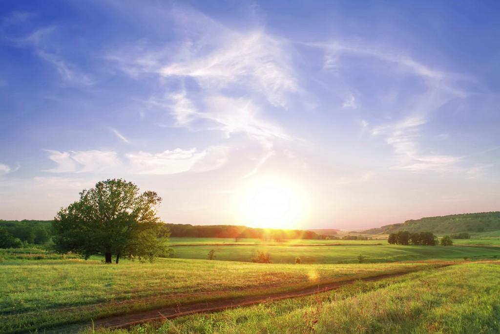 Sunset over vast field