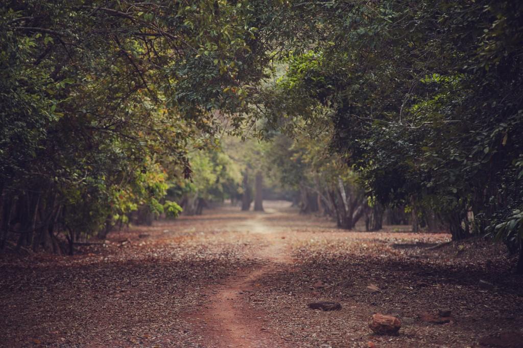 Jungle in Cambodia
