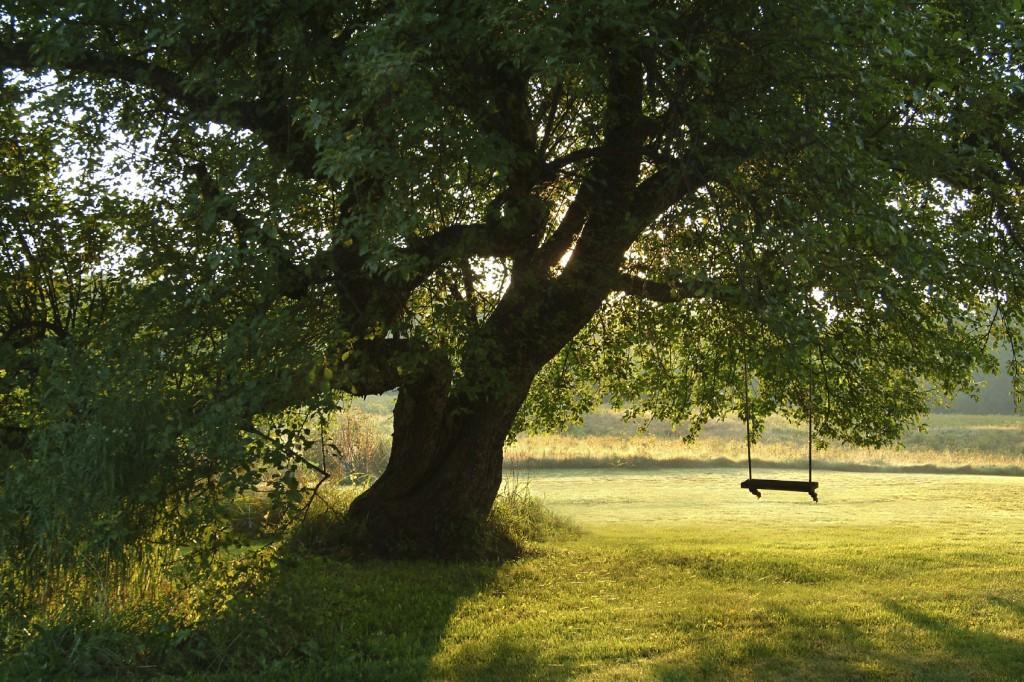 Romantic scene of a single swing in a tree