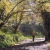 Young man with backpack going by the beatifull forest pathway