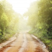 ground road and bush with savanna landscape background