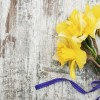 daffodil flowers on a wooden background