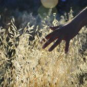 hand touching grass in field at sunset