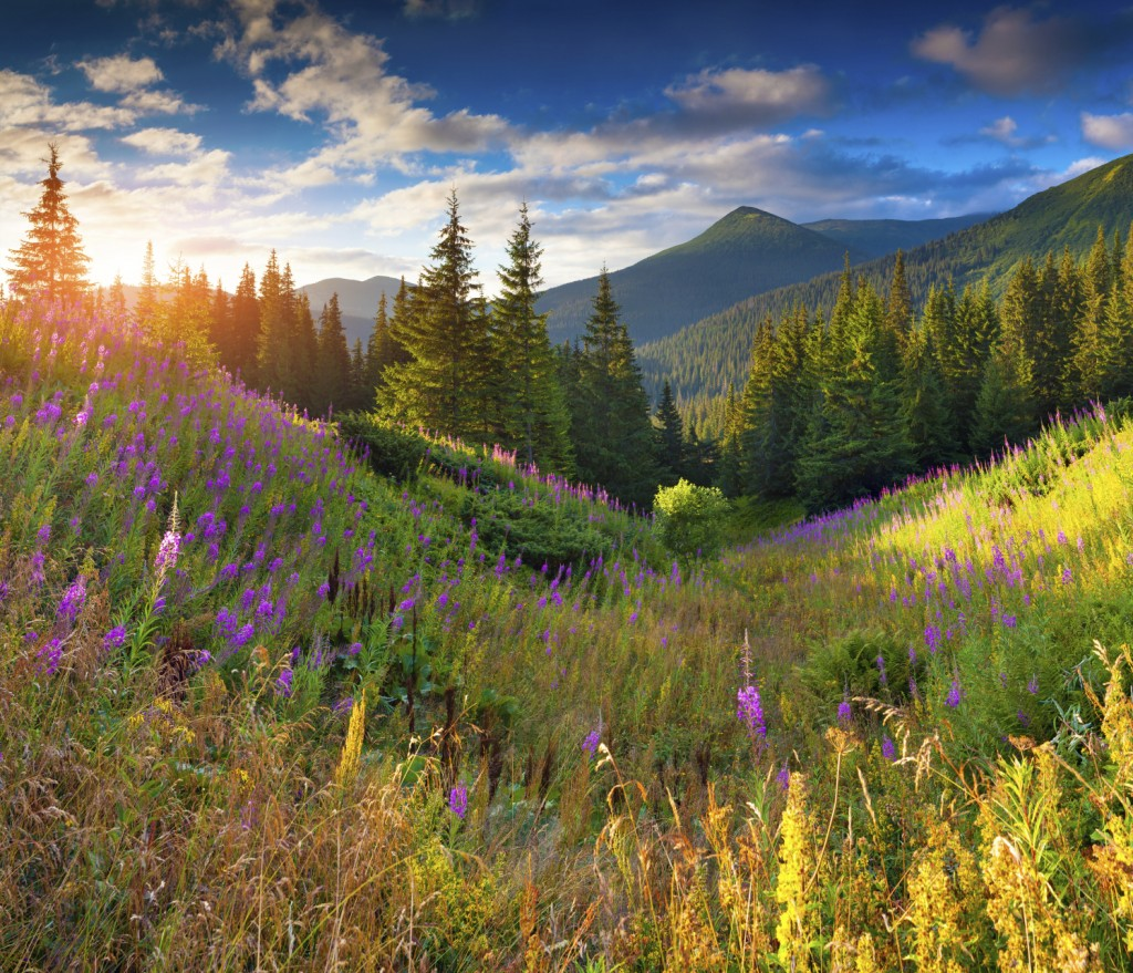 Beautiful autumn landscape in the mountains with pink flowers. S
