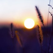 Close-up of plants and sunset