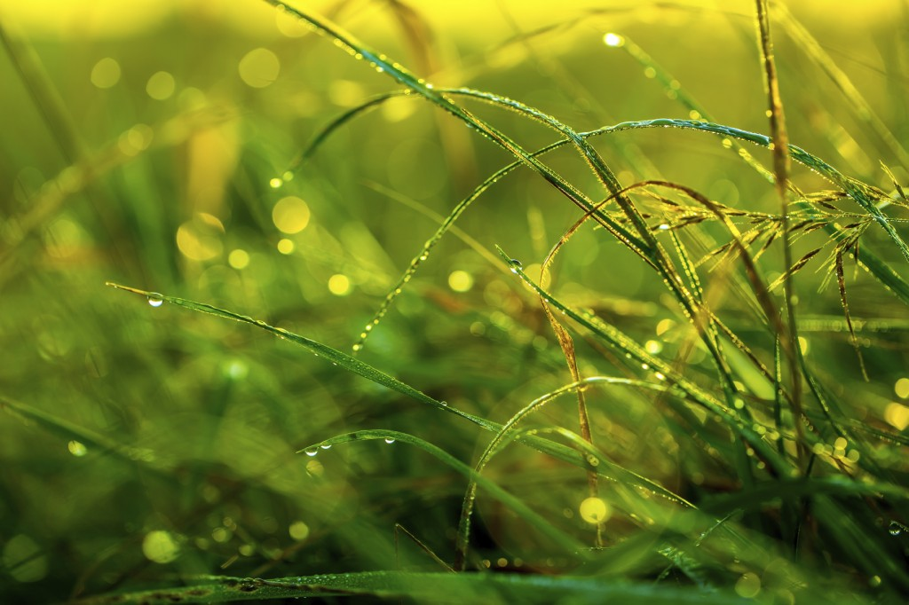 Morning grass after rain in the morning sun backlit