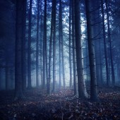 Dark vintage color forest