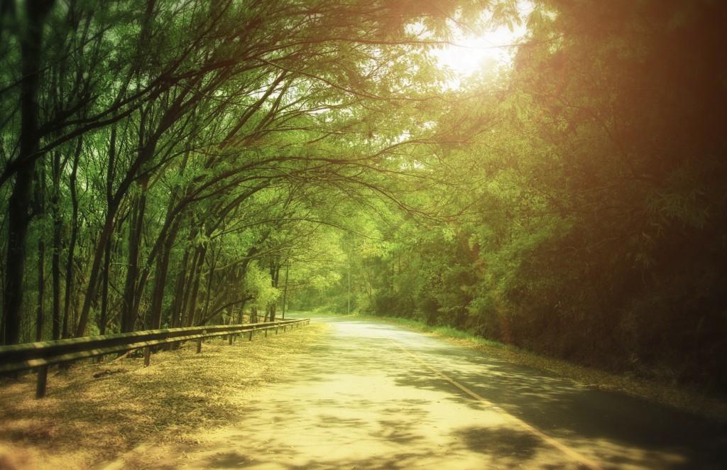 tunnel of green trees on sunlight