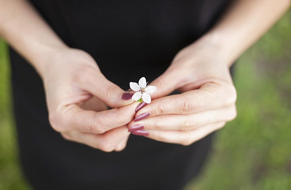 Woman hand with a spring blossom. Sakura cherry flower