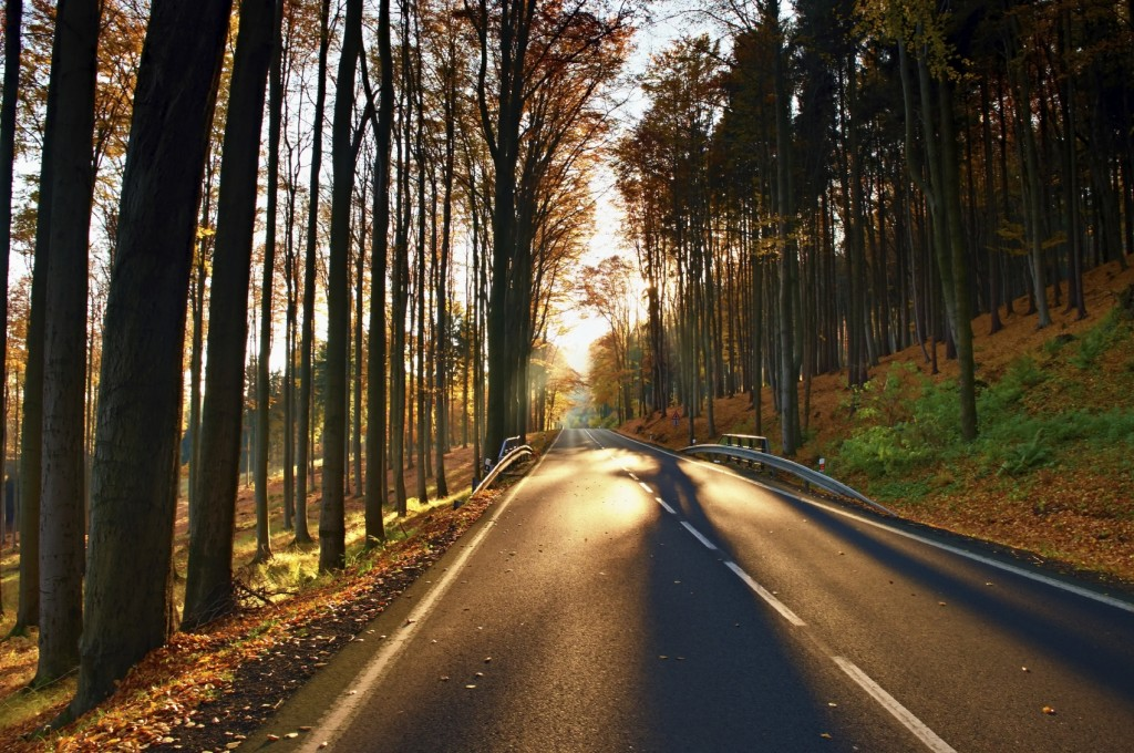 road with the line across the colorful autumn forrest