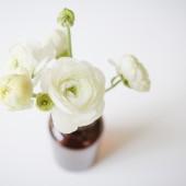 Ranunculus in a vas