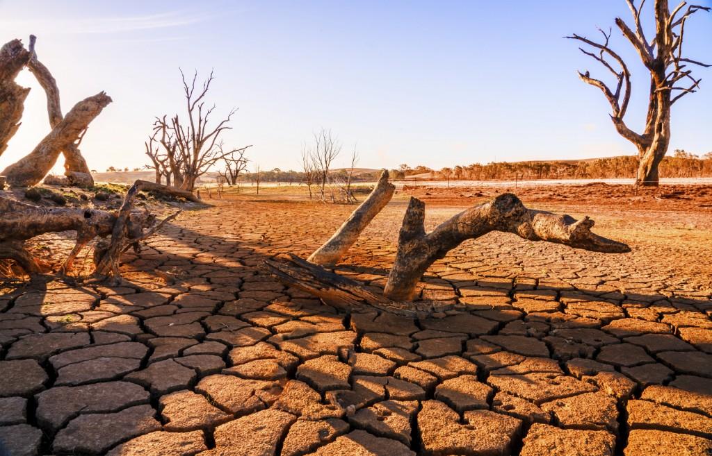 Dead tree in desert under dramatic evening sunset