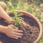 Hand holding a green plant on soil
