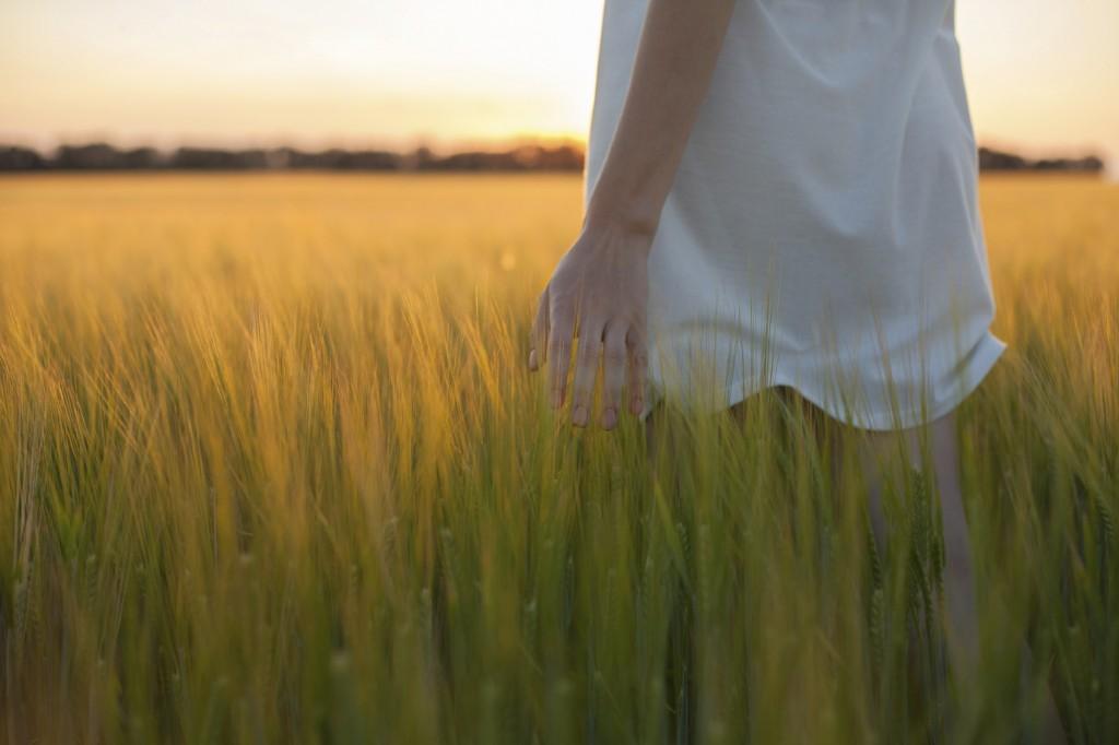 woman touching wheat ear in wheat field