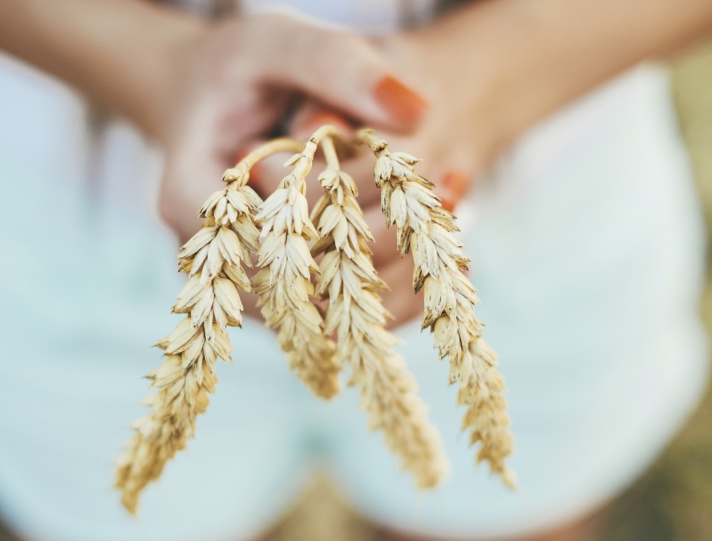 Woman hand on wheatfield