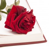 open book and red rose isolated on white