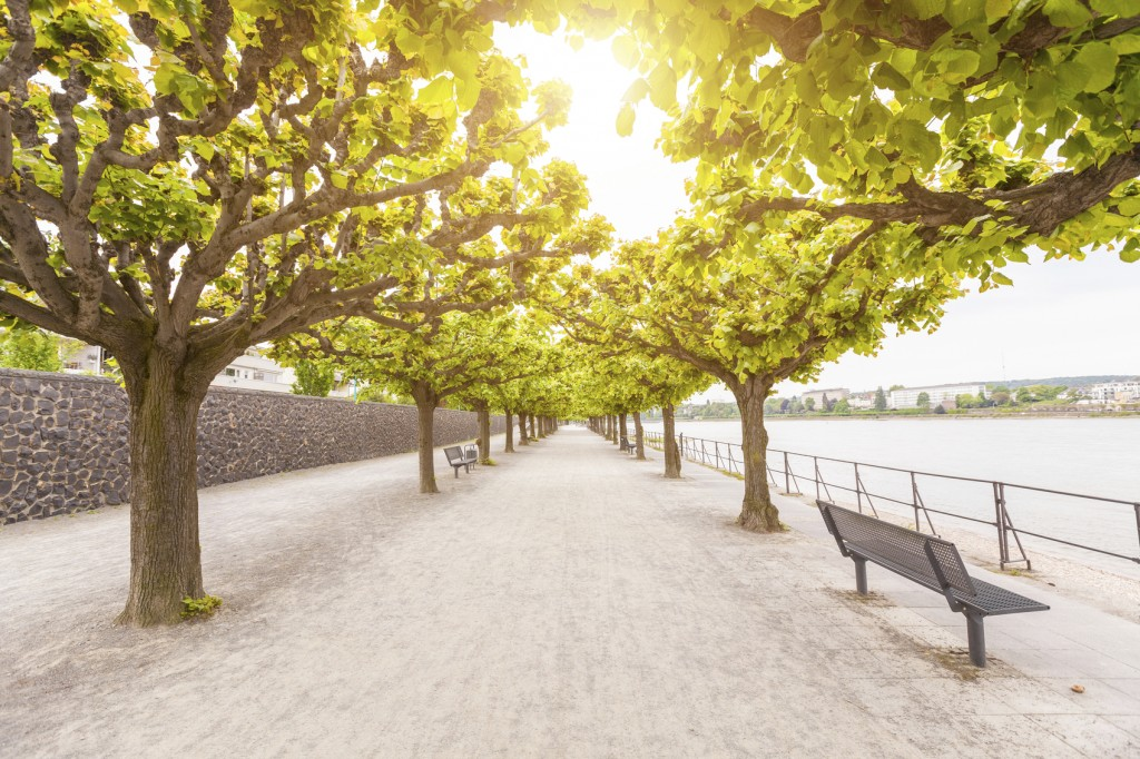 Empty footpath along Rhine river in Bonn