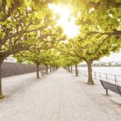 Empty footpath along Rhine river in Bonn