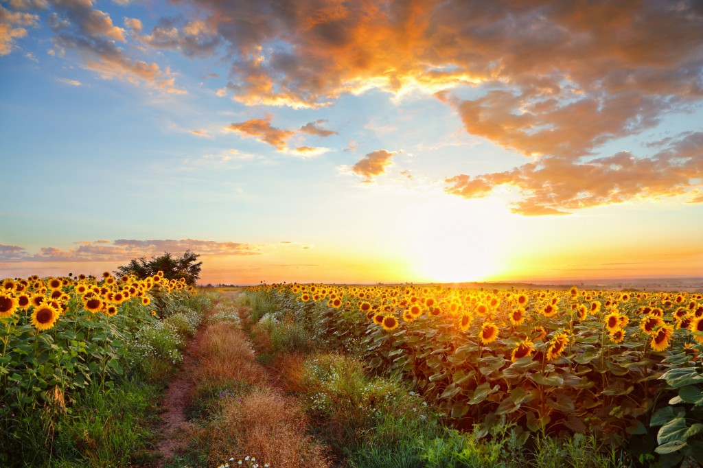 Sunset field landscape.