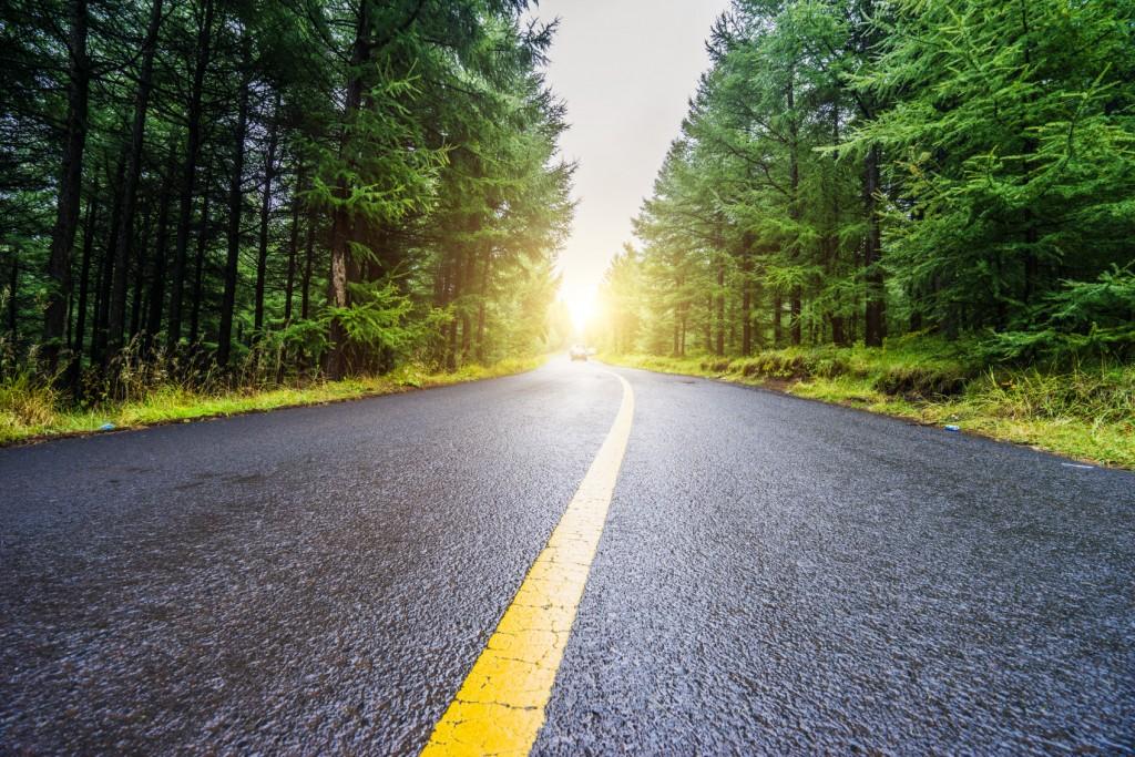 road through evergreen forestn