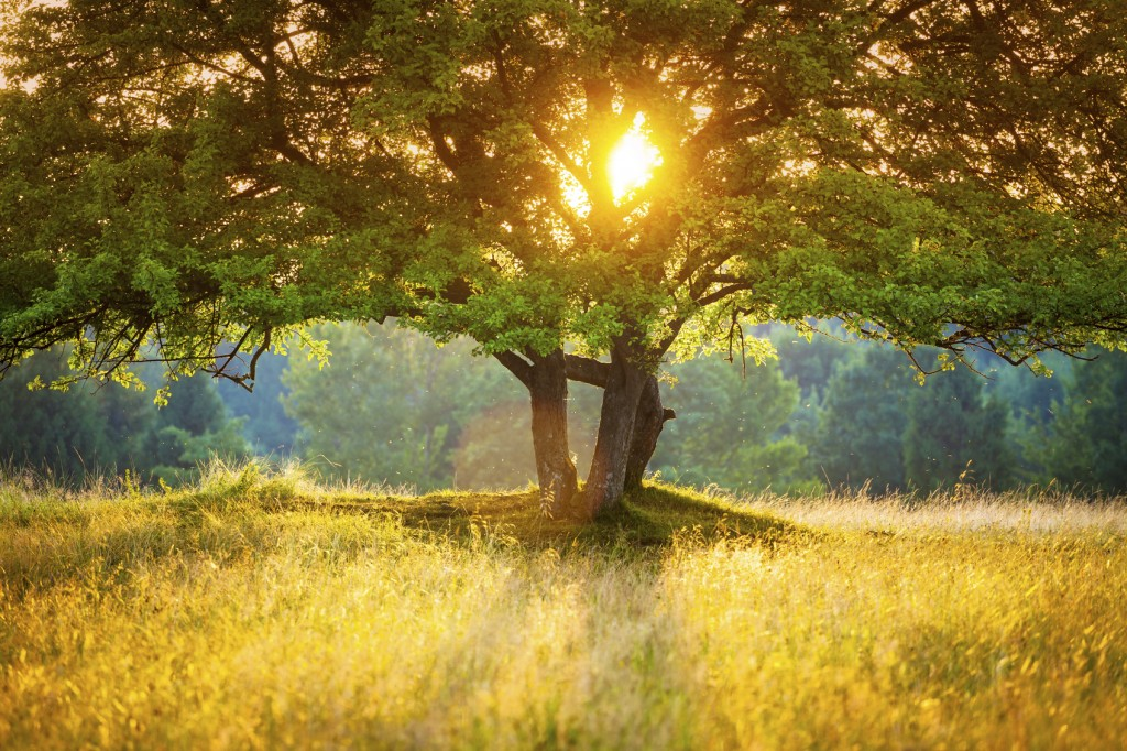 Majestic Tree against the Sunlight during Colorful Sunset