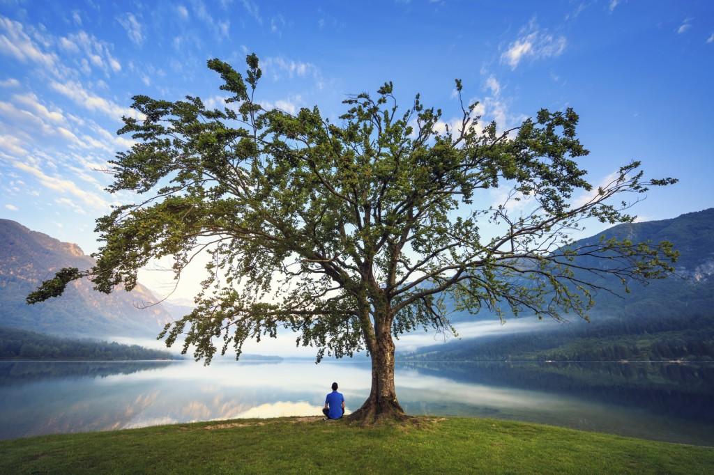 Man in blue shirt sitting under the tree by the Lake Bohinj, Slovenia.