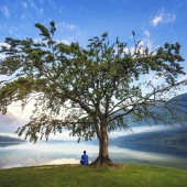 Man in blue shirt sitting under the tree by the Lake Bohinj, Slovenia.
