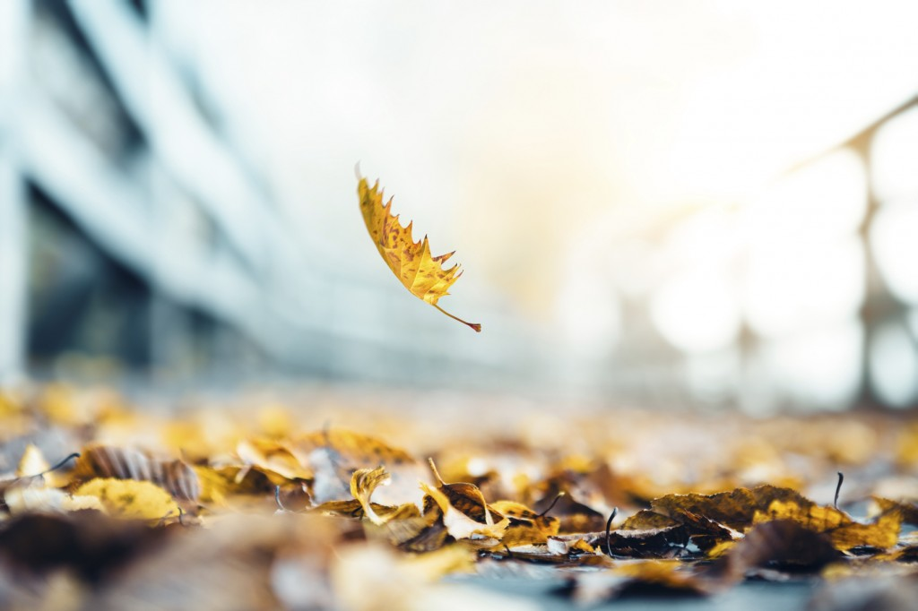 Idyllic autumn scene: autumn leaf falling on wooden footpath covered with dry leaves.